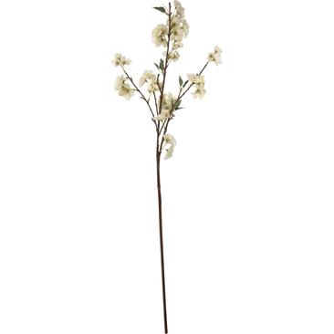 Kirsikka Koristeoksa
